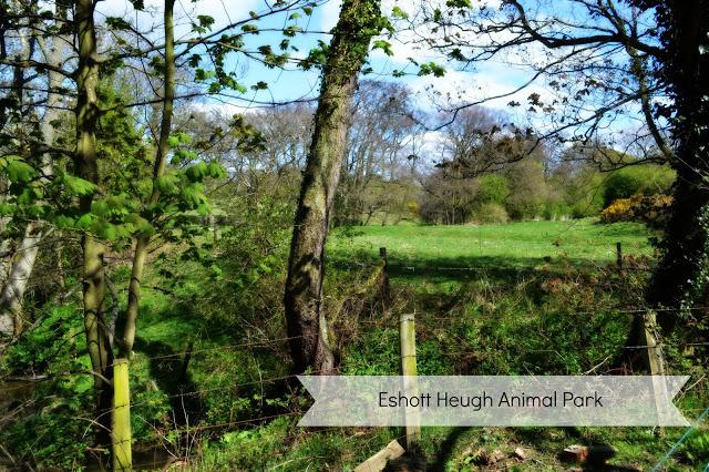 Eshott Heugh Animal Park, Morpeth