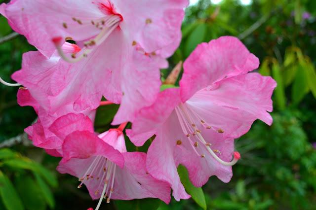 Newby-Hall-flowers