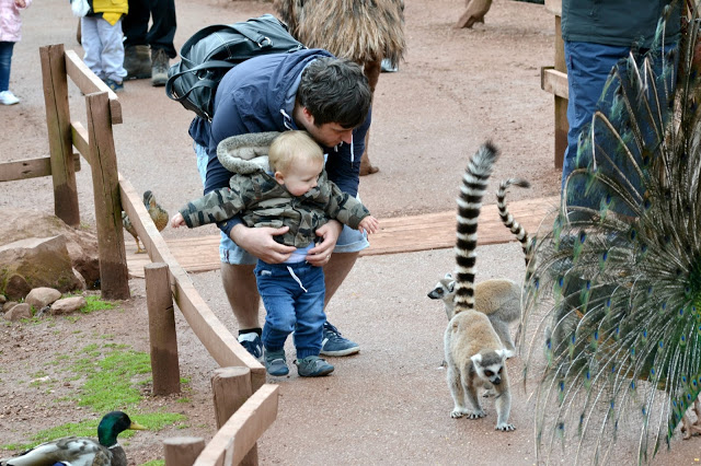 A visit to South Lakes Safari Zoo