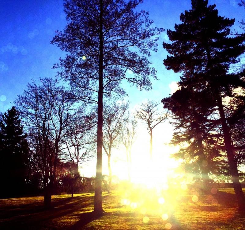 Barnes Park sunset