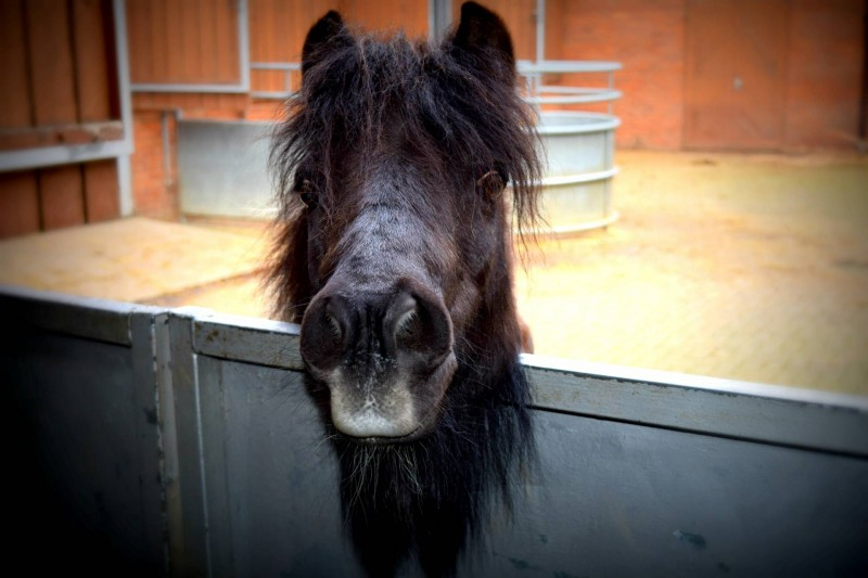 Bill-Quay-farm-pony