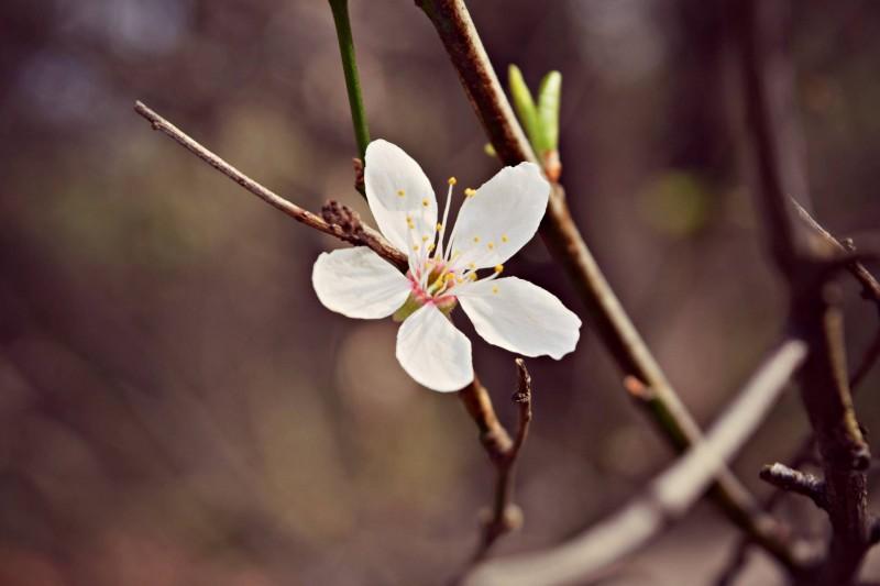 Bill-Quay-Farm-flower