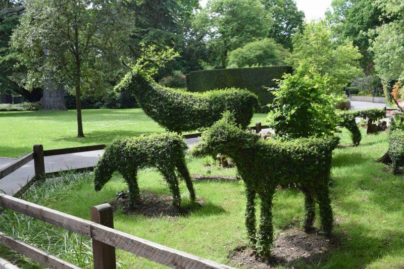 Paultons-hedge-animals