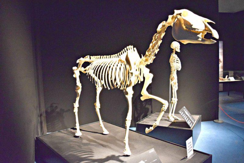 Life-Centre-skeleton