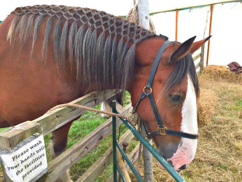 Beamish-horse