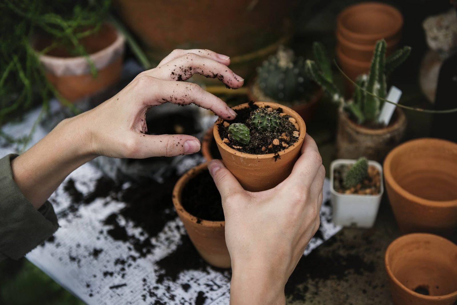Gardening Checklist – Jobs to Do in Autumn