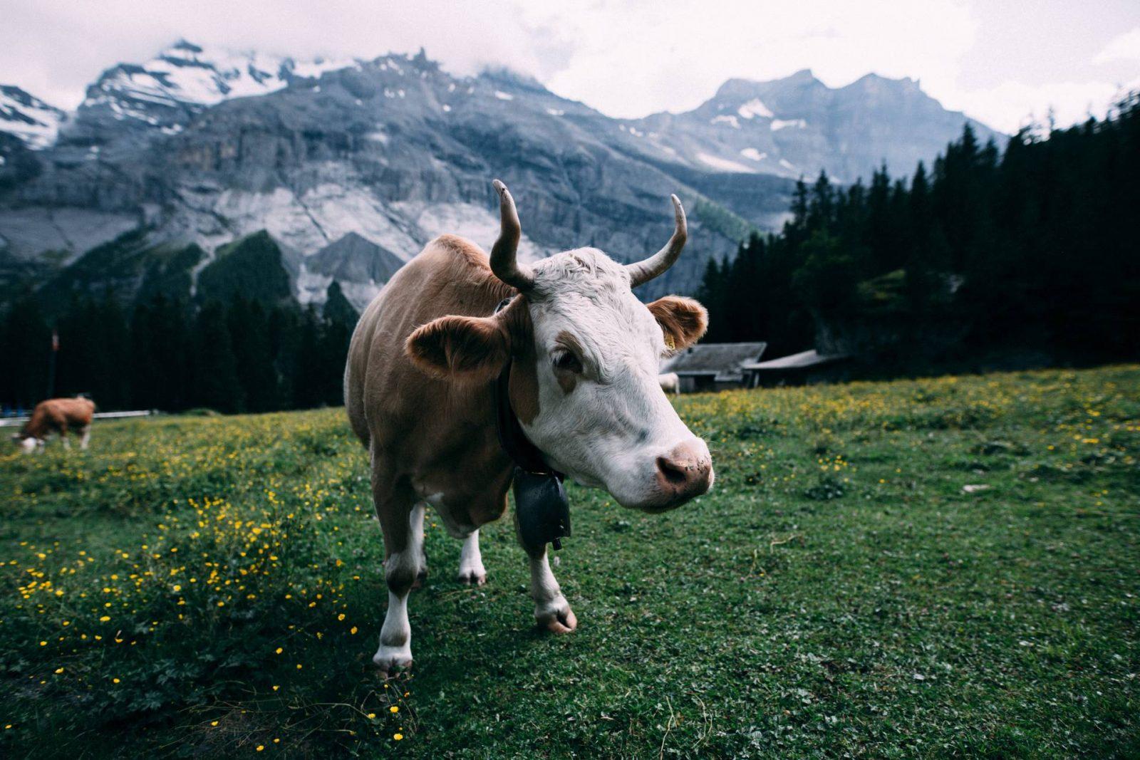 Planning A Trip To Switzerland